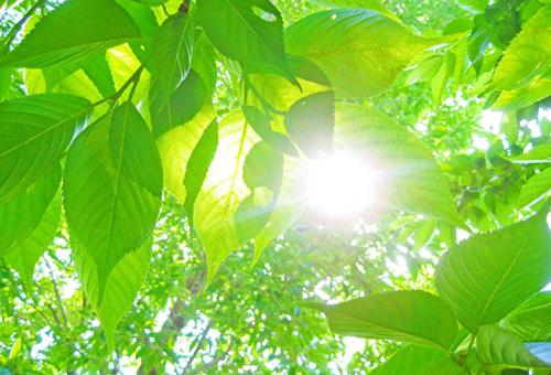 ISO14001 環境方針